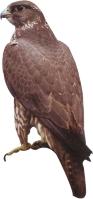 Company Logo Falcon Plumbing
